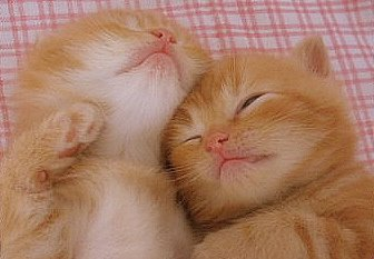 So cute by Gui, o gato from flickr (CC-NC-ND)