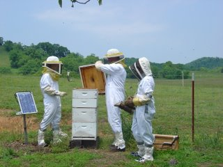 Honey hives