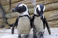Julius and Ethel Iceburg Questioned Regarding the Kidnapping of Toga the Penguin