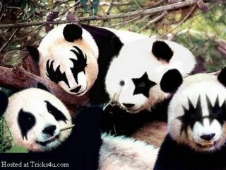 Osos Panda y KISS
