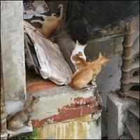 Kulkukissoja Mumbaissa