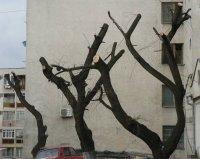 copaci taiati brutal