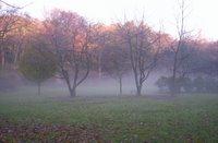 Jesmond Dene Colmans Field