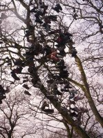Armstrong Park Shoe Tree