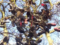 Newcastle Shoe Tree