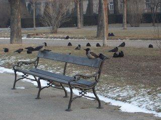 crows(onemorehandbag)