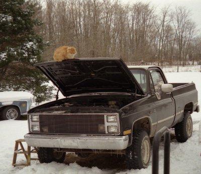 Princess on the truck hood