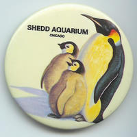 Not a Rockhopper, but a cool button, no?  What?  You think it is easy coming up with this crap?  Come on!  It is a button from the Shedd Aquarium, featuring penguins for fuck's sake!  Gimme a break!