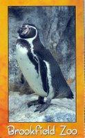 Ariel Humboldt Penguin Martello