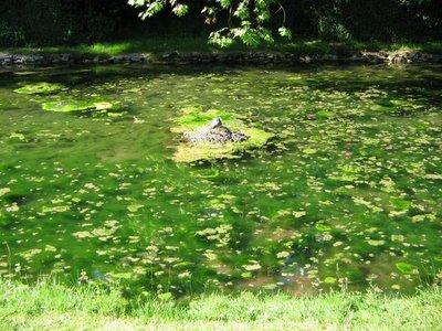 Prato d'acqua. Chantilly, 19-06-2005