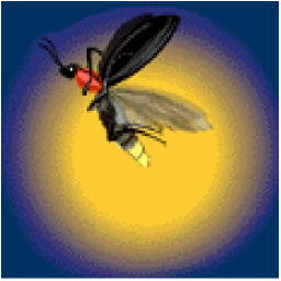 picture of a firefly for bugtong-filipinosongsatbp.blogspot.com