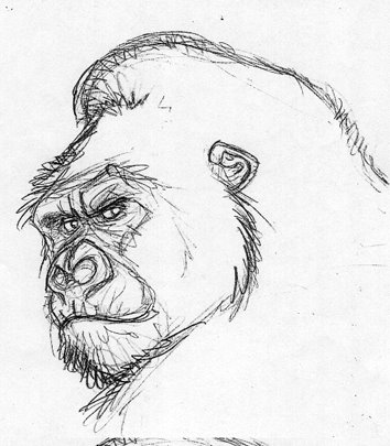 Harald kerchak - Dessin d un gorille ...