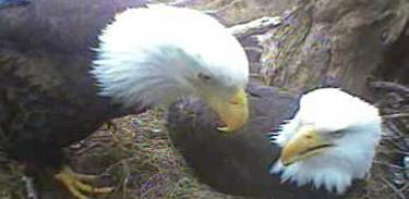 Eagle Eye Cam