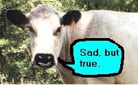 Cow saying 'Sad but true'