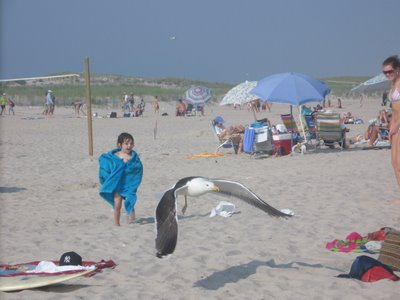 Chasing seagulls at Ponquogue Beach, Hampton Bays, July 3rd