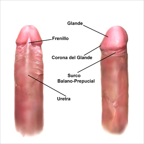 Dolor en la vagina