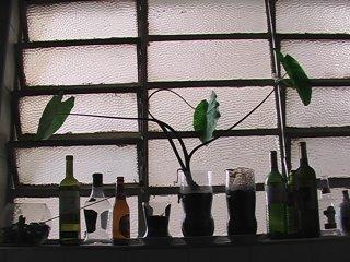 inhame ikebana na janela