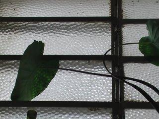 folhas de inhame na janela de casa