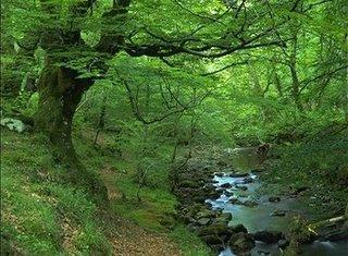Bosque inglés