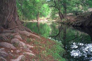 Bosque mexicano (Rioverde)