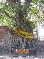 Cool Buddha Tree