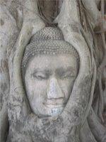 Buddha Tree Close-Up