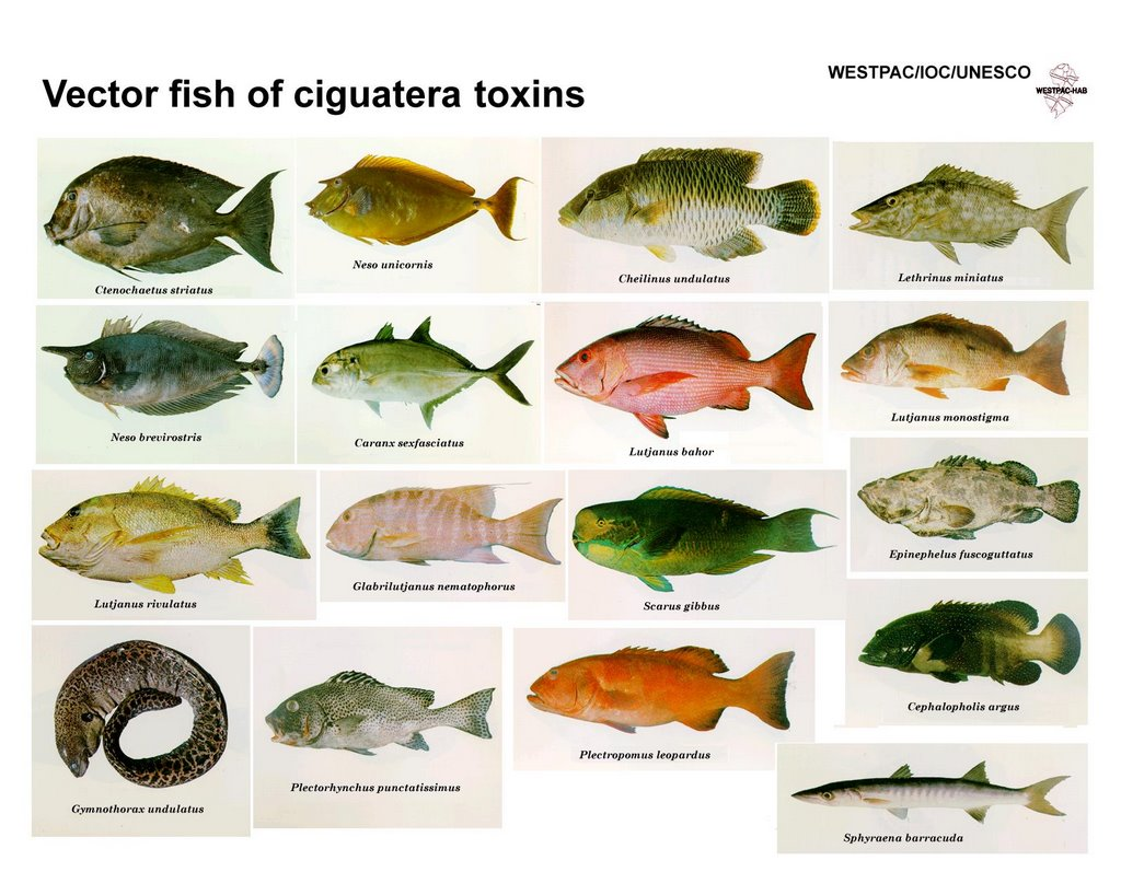 Alb 39 s nature journal april 2006 for Best type of fish to eat
