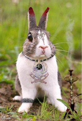 Sunday Bunny Blogging >> The Zeray Gazette Weekend Rabbit Blogging