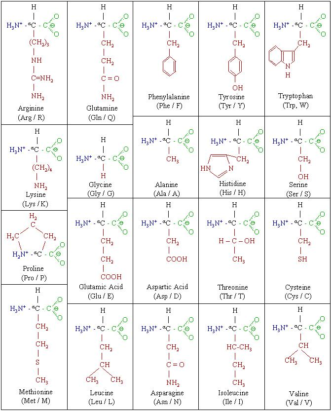 Molecules Amino Acid Chart