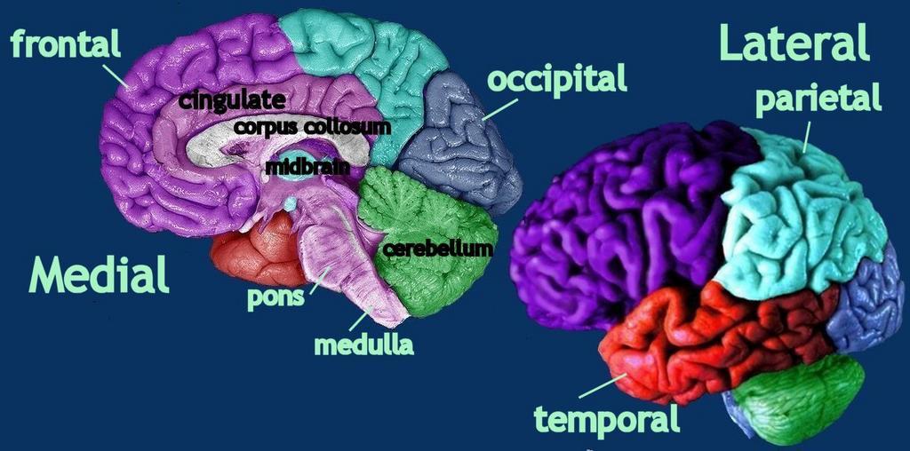 medial&lateral-label1.jpg