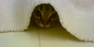 our kitten hiding under rug