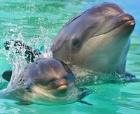 Dolphins call each other by name
