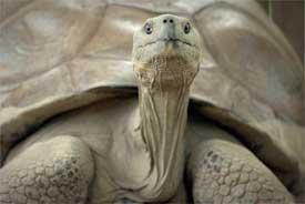 Harriet -- world's oldest creature
