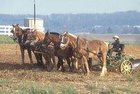 Mennonite farming