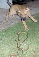 Molly attacks the snake