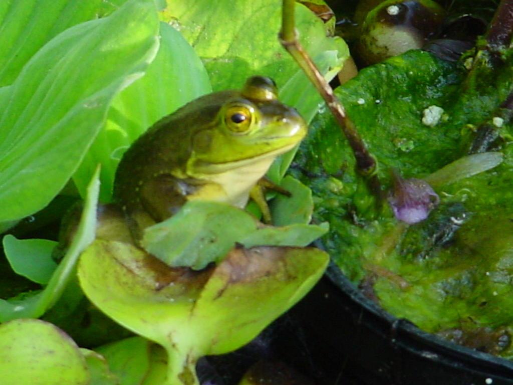http://search.ebay.com/water-lettuce_W0QQfkrZ1QQfnuZ1QQfromZR8