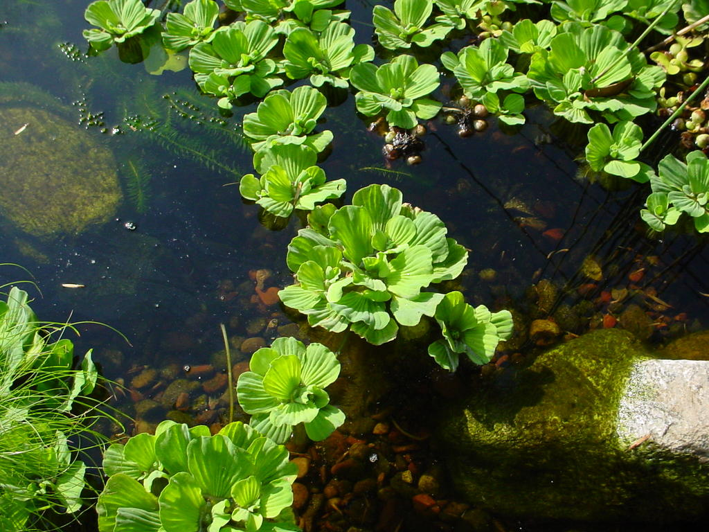My So Called Pond Life Pond Plants Frogs And Turtles