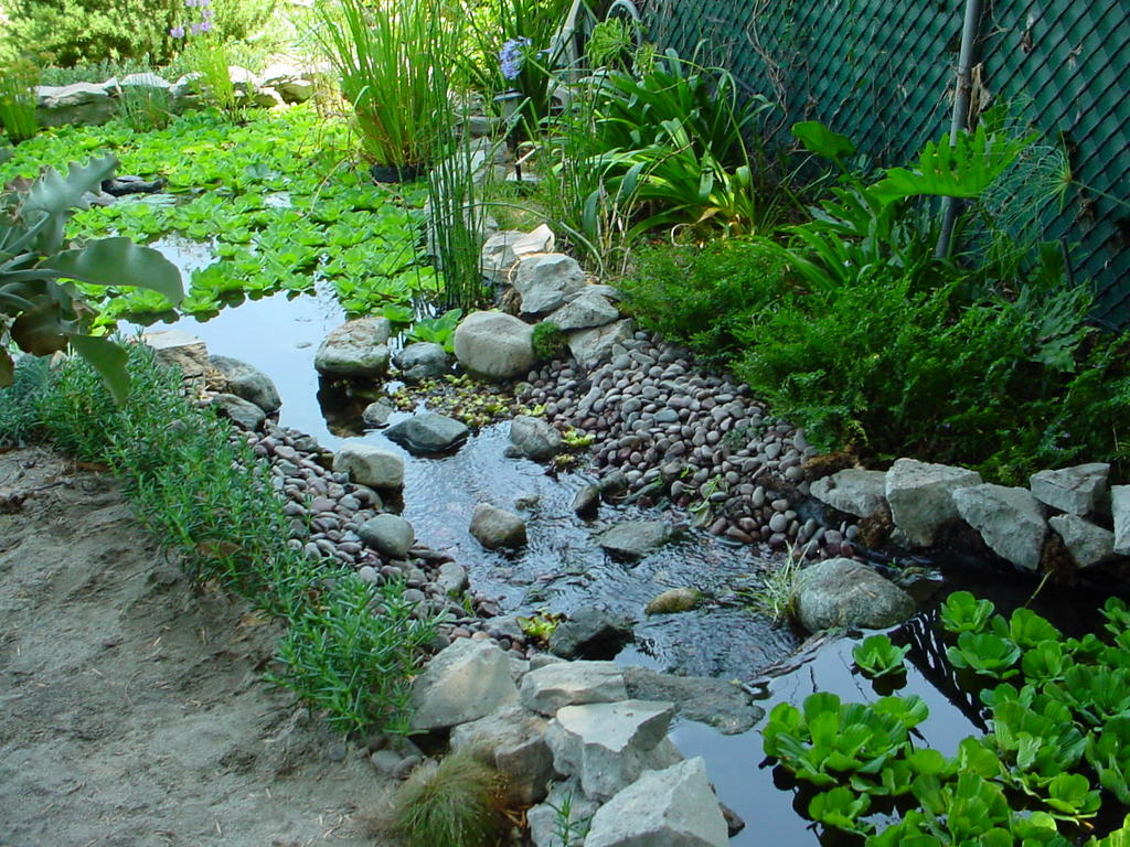 My So Called Pond Life Pond Edging