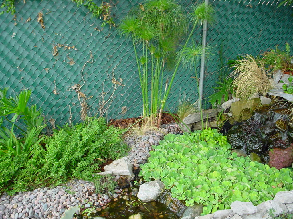 My So Called Pond Life Pond Edging Landscaping Around