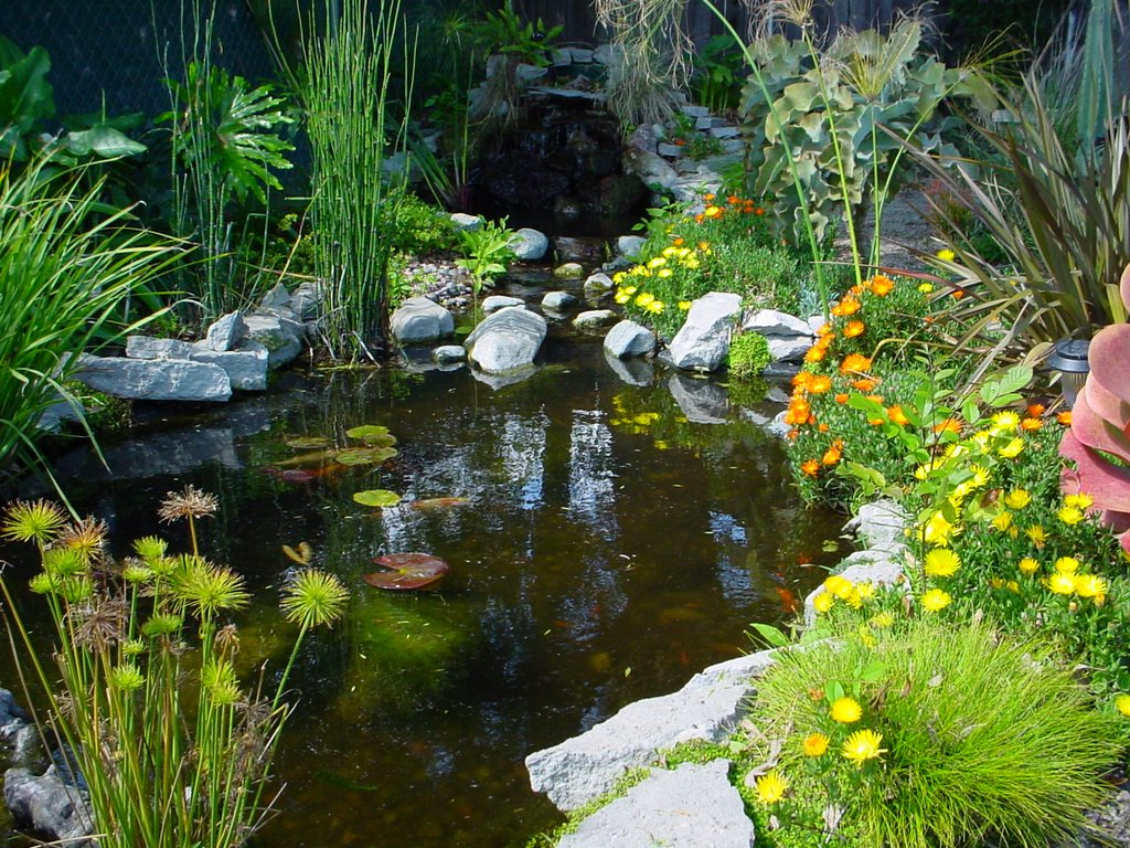 My so called pond life for Garden pond life