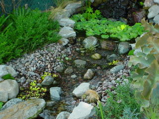 My so called pond life pond edging for Natural pond edging ideas