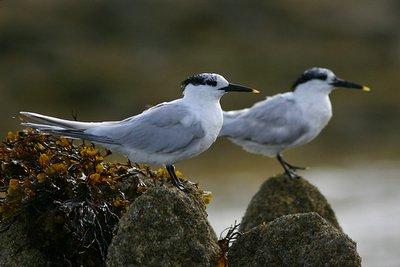 rencontres naturalistes seichamps Bondy