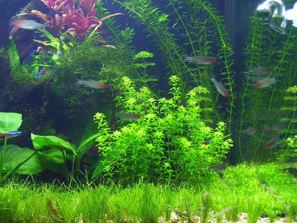 acquariofilia l acquario grande