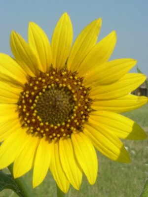 Sunflower, Texas, 2005