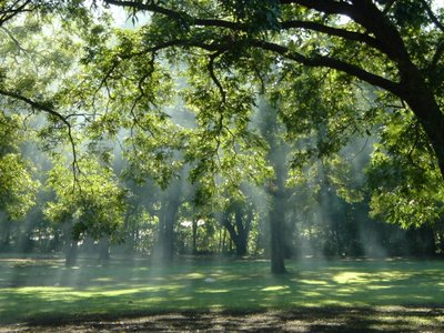 late in the day sunlight streaming through trees, Peacan Grove Park, Oak Cliff, Dallas, TX, Autumn 2005