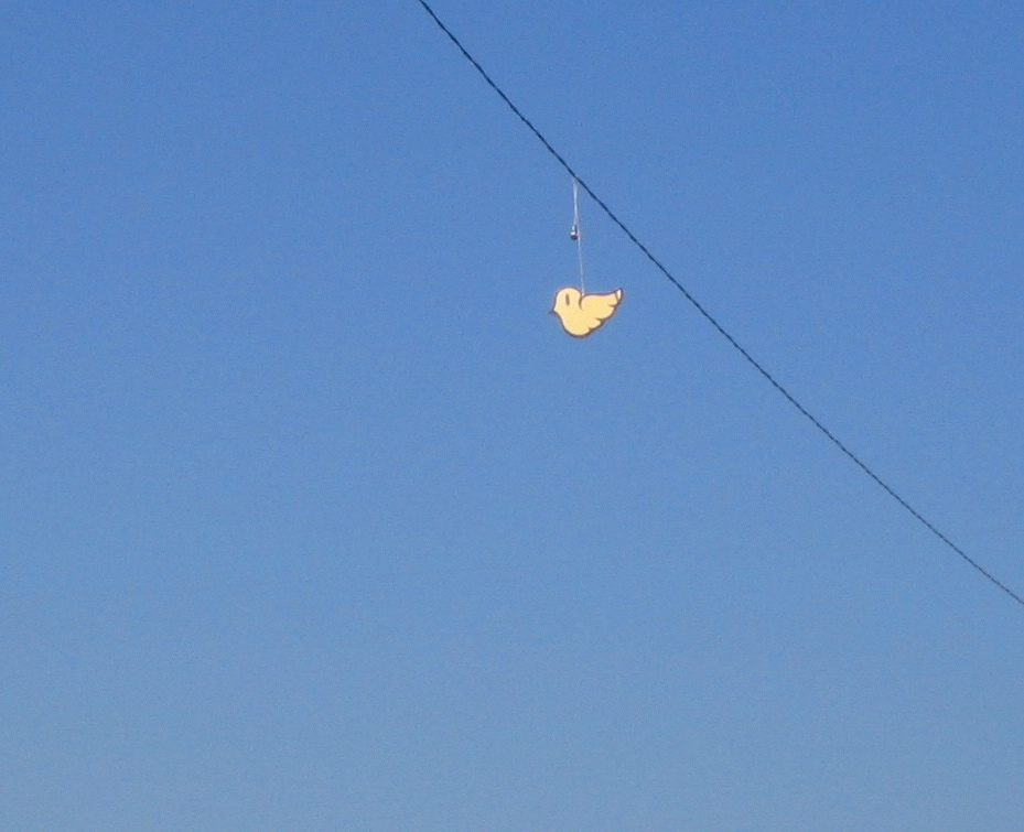 Montecito Heights: Bird on a Wire
