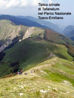 Il crinale a ovest del Monte Prado. Zona tipica del Tafanetum