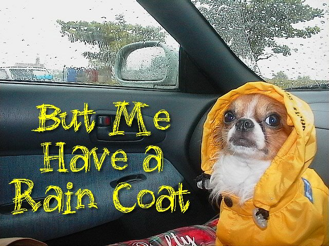 From TigerSan's PhotoBlog: But Me Have a Rain Coat
