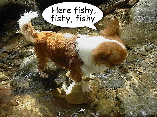 From TigerSan's PhotoBlog: Here fishy, fishy, fishy
