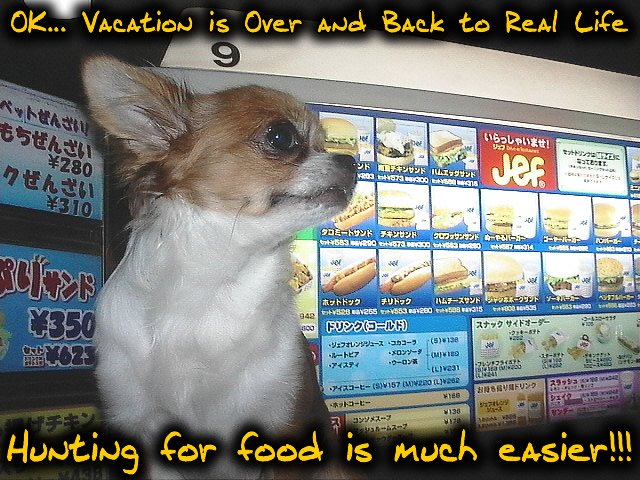 From TigerSan's PhotoBlog: OK... Vacation is Over and Back to Real Life. Hunting for food is much easier!!!